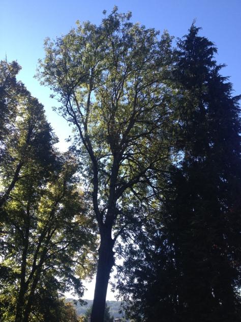 Un arbre est-il juste un arbres ?
